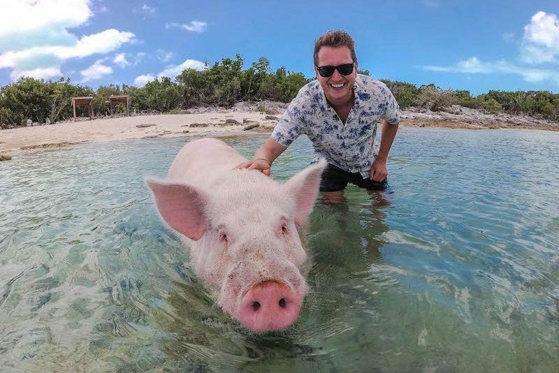 Schwimmende Bahamas Schweine Alles Zu Den Schweinen Der Karibik