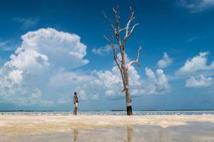 Einzelner Baum am Strand
