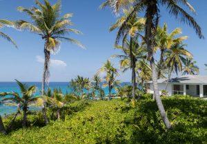 Palmen mit Meer im Hintergrund
