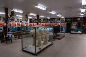 Hallo im Inuit Museum