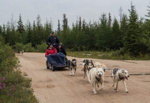 Hunde ziehen Wagen