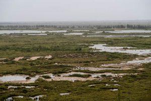 Tundra Landschaft in Manitoba