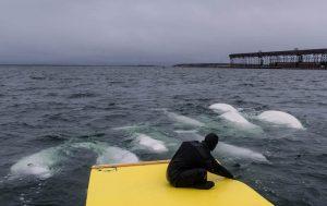 Beim Aquagliding in der Hudson Bay