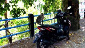Affe auf parkendem Roller in Lombok Indonesien