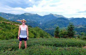 Person in Teeplantagen auf der China Backpacking Reise