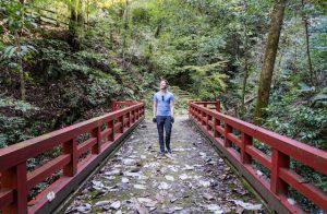 Rote Brücke im Wald mit Person in der Mitte