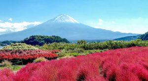 Blick auf den Mt. Fuji Japan mit Blumen davor