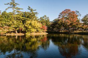Teich und bunte Bäume
