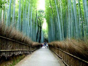 Weg im Bambuswald Kyoto