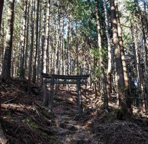 Wald bei Nikko