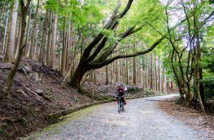 Weg umgeben von Wald mit Fahrradfahrer in der Nara Präfektur