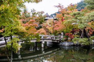 Gefärbtes Laub im Herbst im Park