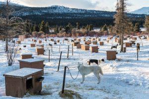 hundefarm im Schnee mit vielen kleinen Hütten
