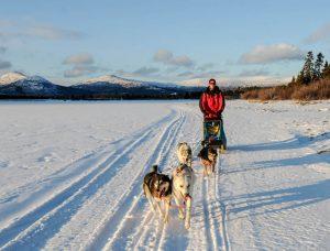 Hundeschlittenfahrt im Schnee mit Person