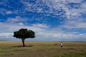 Baum in Nationalpark mit blauem Himmel