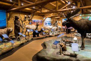 MacBride Museum of Yukon History als Sehenswürdigkeit in Whitehorse von innen
