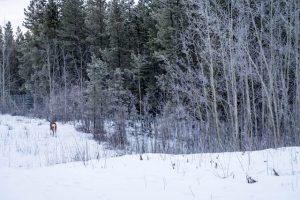 Reserve mit Tier und Schnee im Wald
