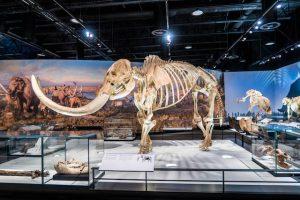 Mammut Skelett im RAM als eine der Edmonton Sehenswürdigkeiten
