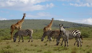 Tiere auf Safari in Tansania