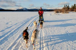 Schlittenhunde im Winter in Kanada