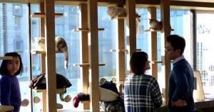 Katzen im Café in Südkorea