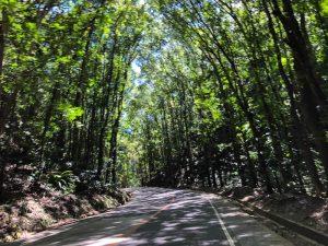 Straße mit Bäumen
