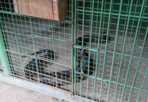 Schlange in Käfig
