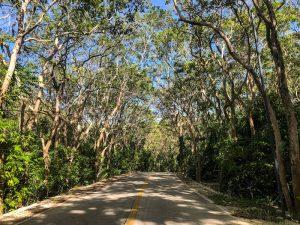 Straße durch den Wald mit Bäumen an den Seiten