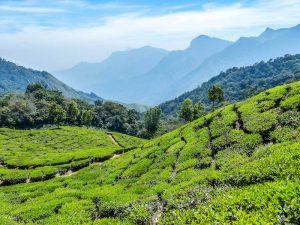 Teeplantagen Munnar Kerala Hügel