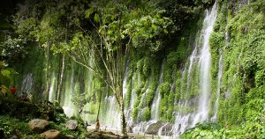 Green tree at the Asik Asik Falls