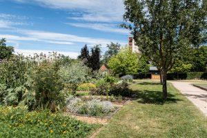 Beete und Bäume im Garten