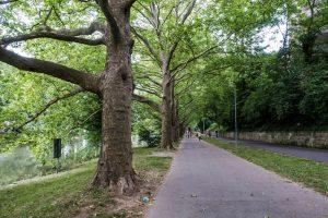 Weg an Bäumen vorbei