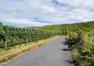 Straße durch die Weinberge Heilbronns