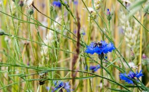 Blume auf Feldern