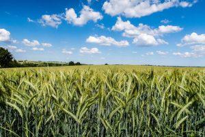 Felder in der Natur