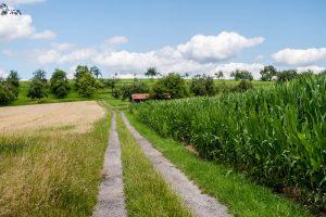 Feldweg bei Schorndorf
