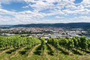 Blick auf Weingüter und Stadt Schorndorf vom Grafenberg