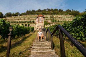 Saale-Unstrut vineyards