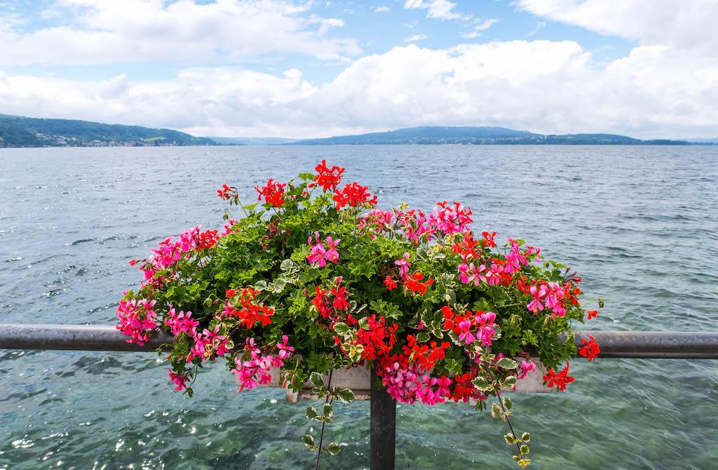 Blumen vor dem Wasser